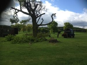 tree contractor leeds