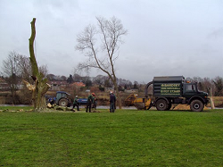 tree services harrogate, leeds, wetherby