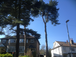 Tree Removal Leeds, Harrogate, Wetherby