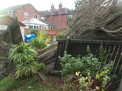 Tree Cutting Leeds, Harrogate, Wetherby