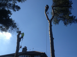 Tree Surgeons Leeds, harrogate, Wetherby