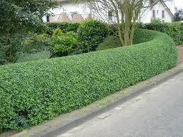 hedge cutting wetherby