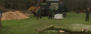 Tree Surgery Leeds