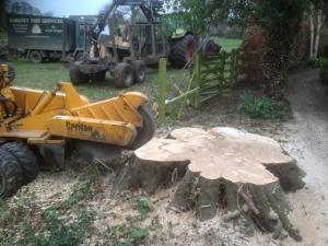 tree stump grinding harrogate