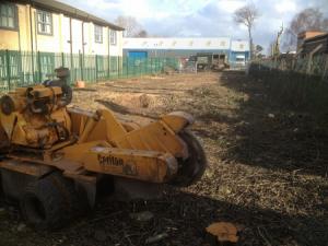 tree stump removal harrogate